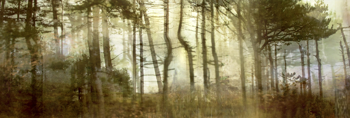 "Pine Forest (from Series ""Constructed Landscapes"")"