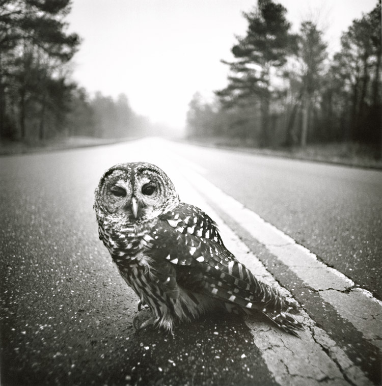 Owl, Big Thicket, Texas
