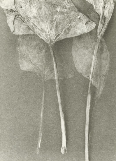 Untitled (Stems)