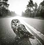 Arthur Tress - Owl, Big Thicket, Texas Click for more Images