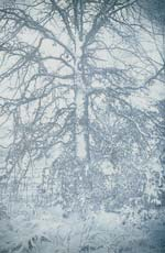 Ted Jones - Virginia Landscape 5 (Tree in Snow) Click for more Images